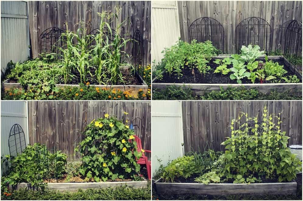 blog post 1 - garden