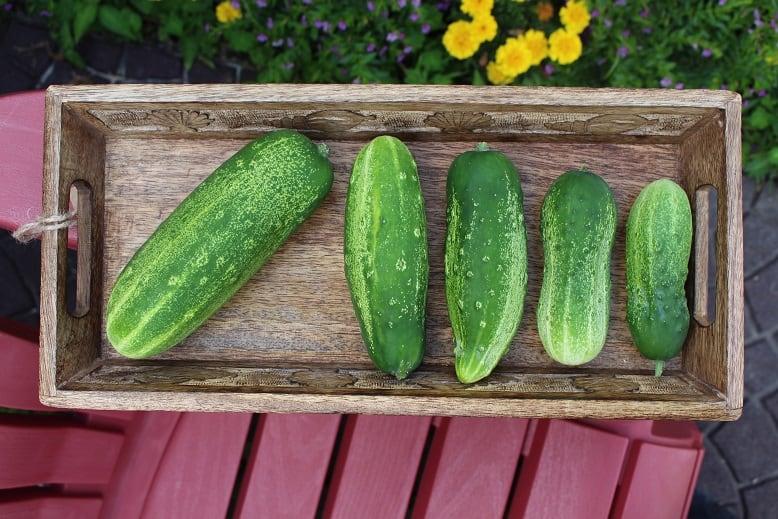Cucumber Spotlight