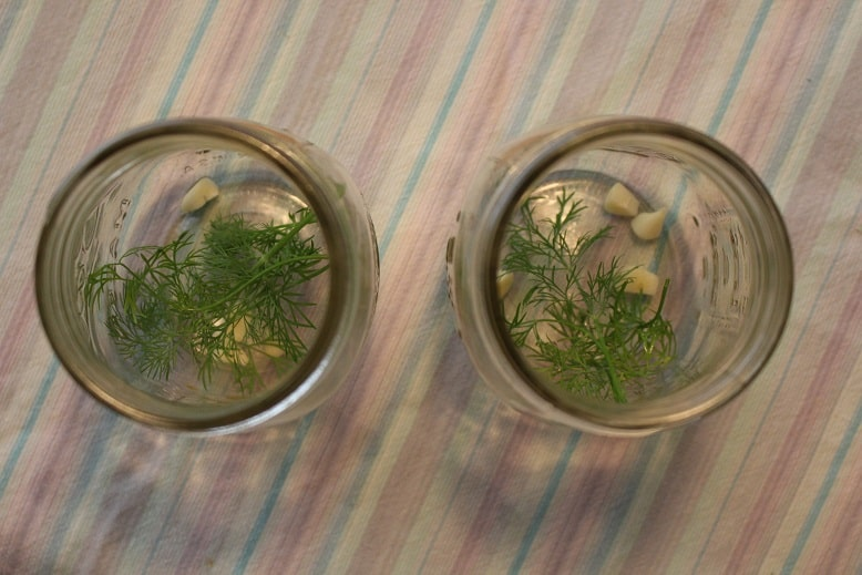 Pickle jars with garlic and dill