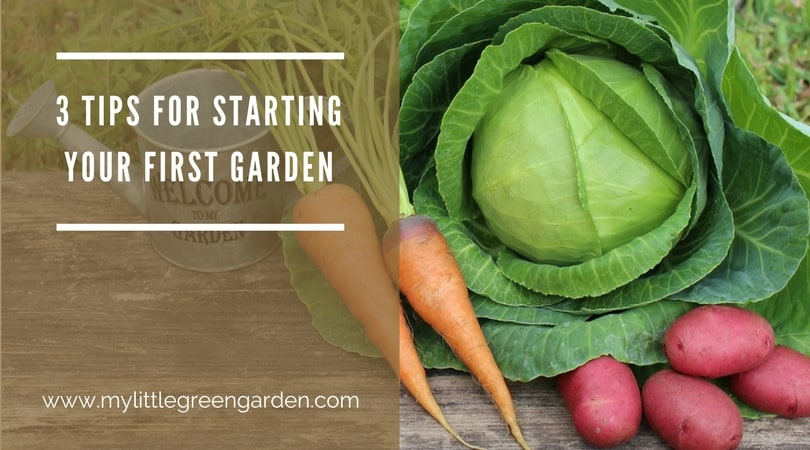 tips for starting your first garden