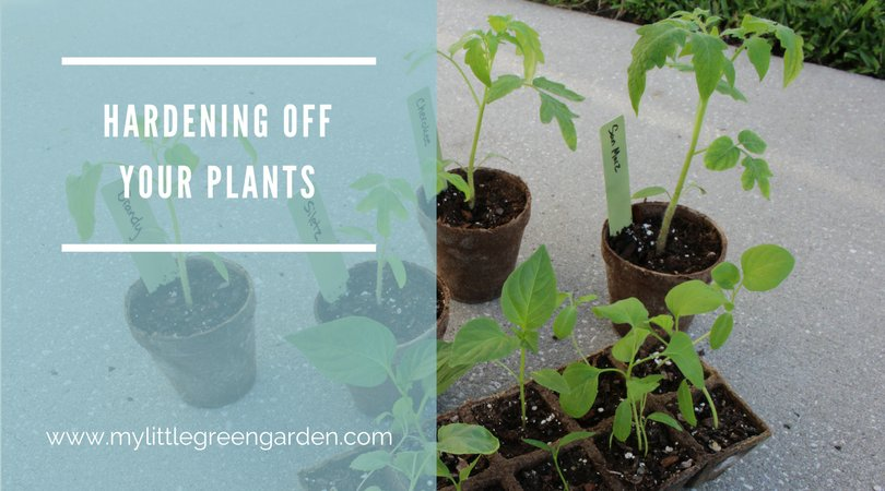 Hardening Off Your Plants