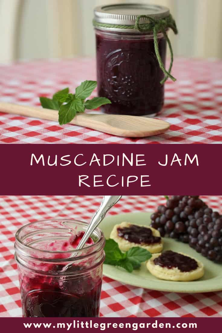 If you've never had muscadine jam, you're missing out! The grape of the south – it's tough and thrives in hot, humid climates. The large grapes are full of flavor, both sweet and tart. If you have the pleasure of getting your hands on some of these, try out this muscadine jam recipe!