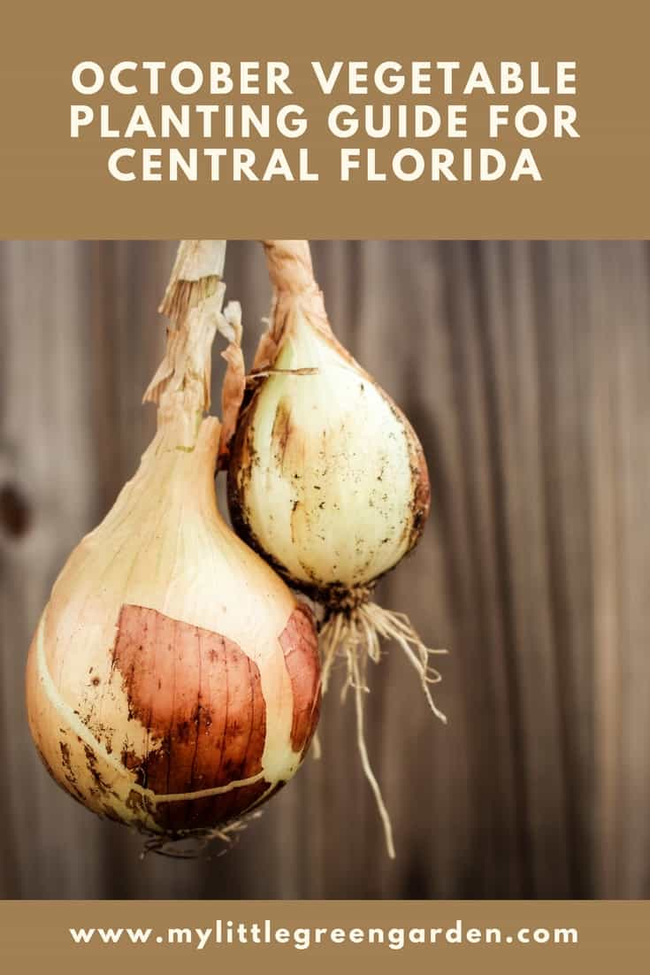 What to Plant in October in Central Florida Vegetable Guide