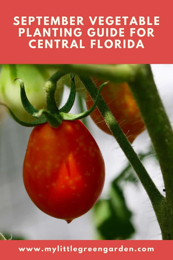 What to Plant in September in Central Florida Vegetable Guide