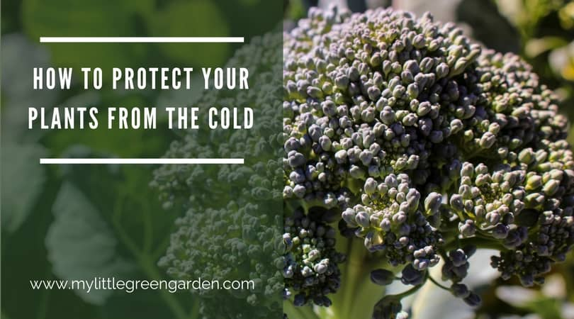 How To Protect Your Plants from the Cold