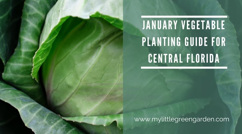 What to Plant in January in Central Florida Vegetable Guide
