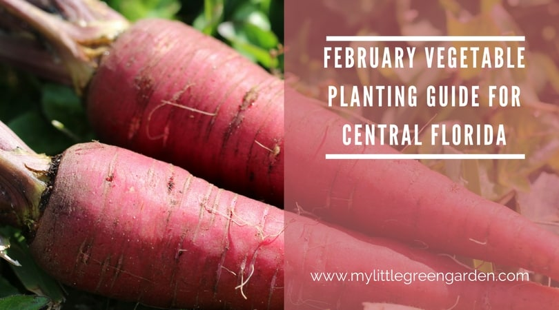 What to Plant in February in Central Florida Vegetable Guide