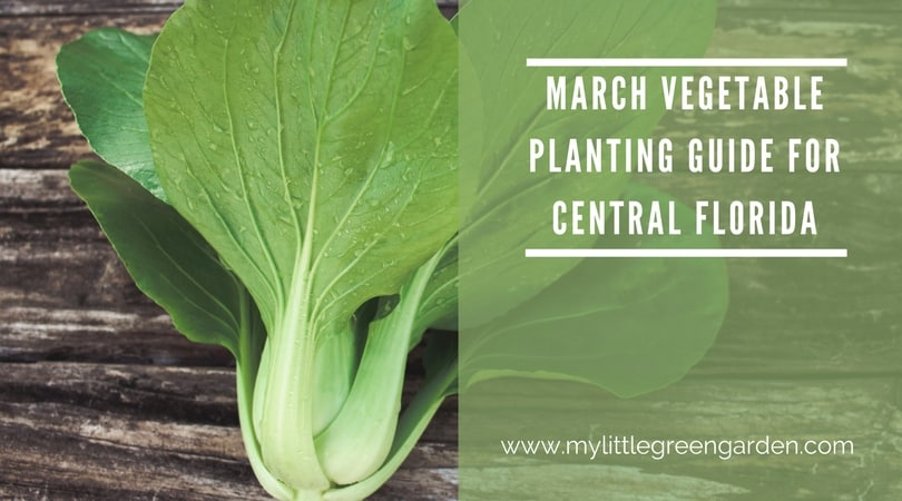 March Vegetable Planting Guide For Central Florida   My Little Green Garden