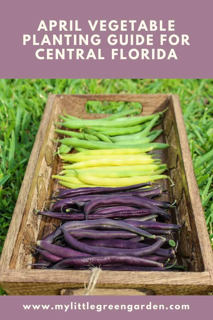 What to Plant in April in Central Florida