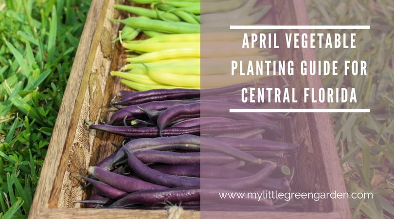 April Vegetable Planting Guide For Central Florida My Little Green Garden
