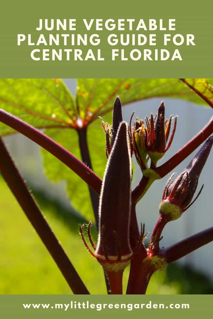 What to Plant in August in Central Florida Vegetable Guide