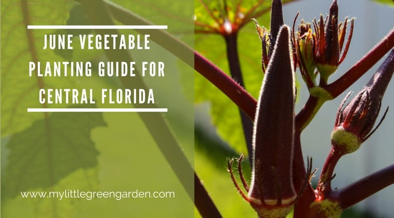 What to Plant in June in Central Florida Vegetable Guide