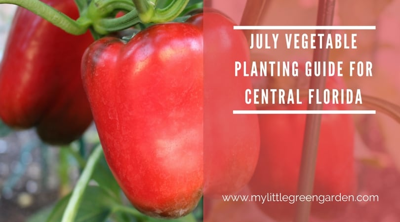 July Vegetable Planting Guide for Central Florida