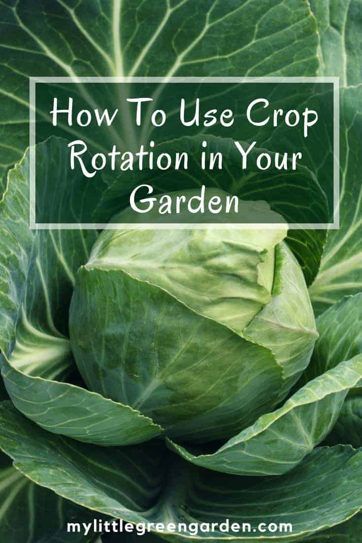 How To Use Crop Rotation in Your Garden