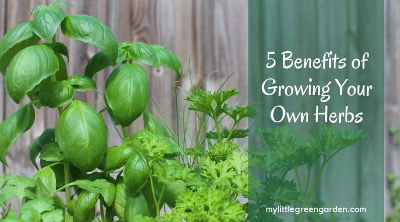 5 Benefits of Growing Your Own Herbs
