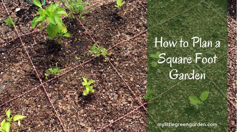 How To Plan a Square Foot Garden