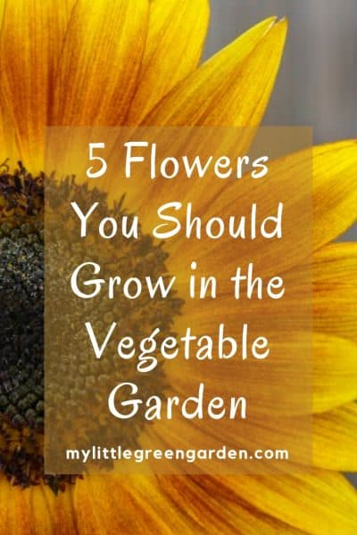 5 Flowers You Should Grow in the Vegetable Garden