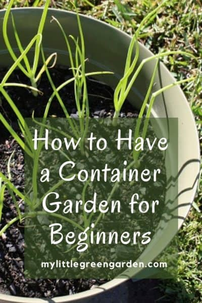 How to Have a Container Garden for Beginners