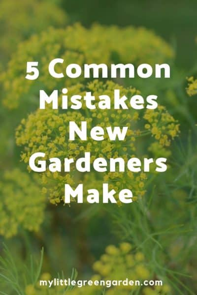 5 Common Mistakes New Gardeners Make