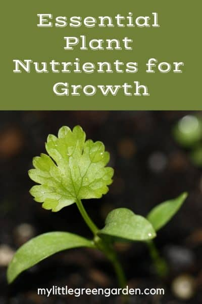 Essential Plant Nutrients for Growth