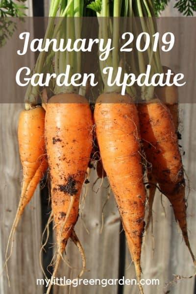 January 2019 Garden Update