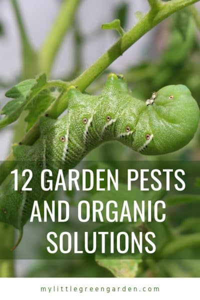 12 Garden Pests and Organic Solutions