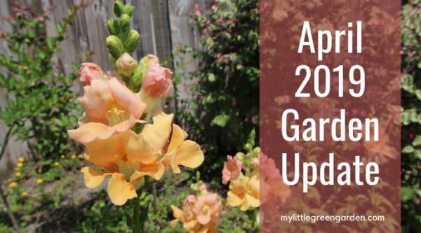 April 2019 Garden Update