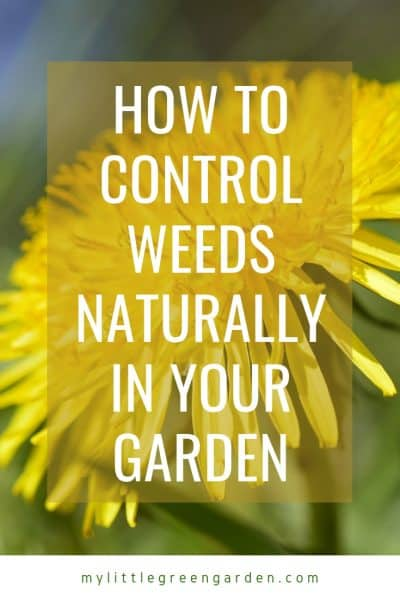 How to Control Weeds Naturally in Your Garden