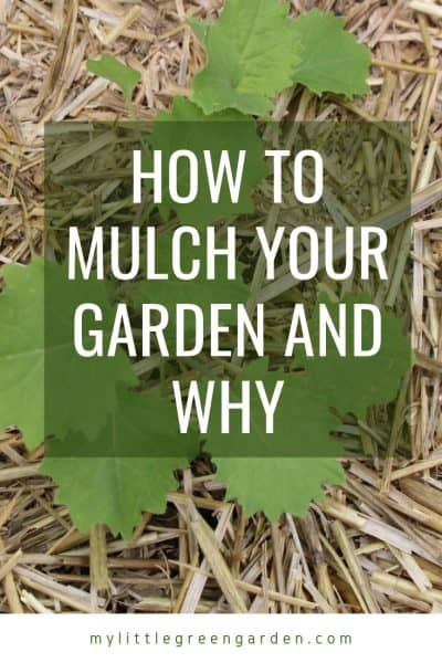 How to Mulch Your Garden and Why