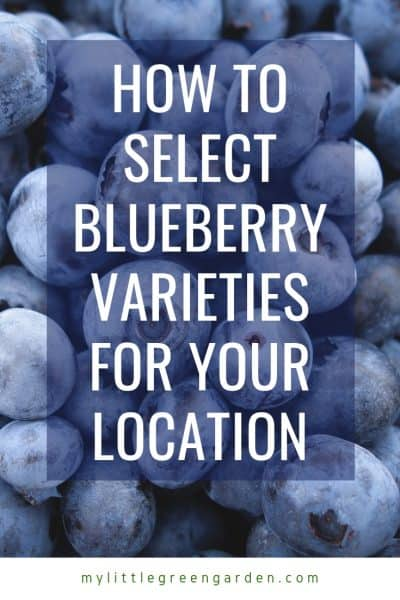 How to Select Blueberry Varieties for Your Location