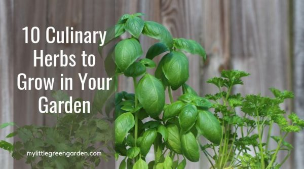10 Culinary Herbs to Grow in Your Garden