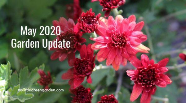 May 2020 Garden Update