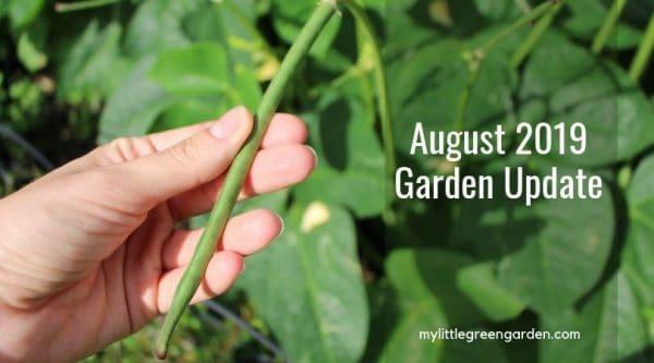 August 2019 Garden Update
