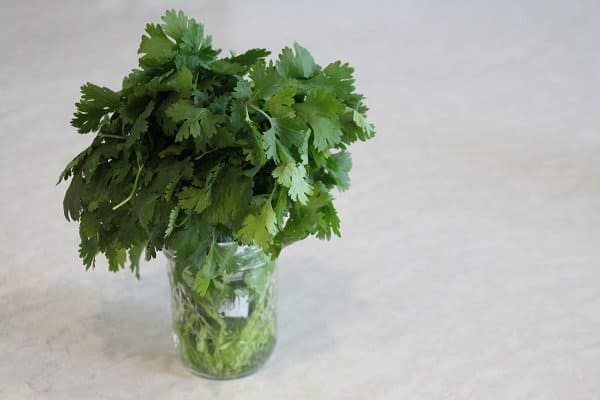 Cilantro Pesto in a Jar