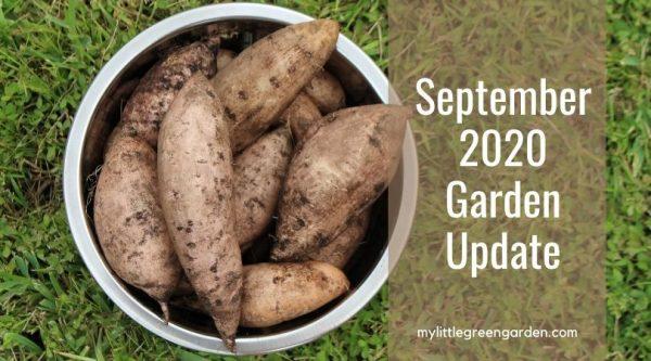 September 2020 Garden Update